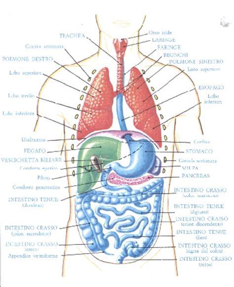 Organi Interni Corpo Umano Lato Sinistro - 4 d i quattro elementi e la quintessenza