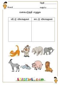 classify  pictures worksheetsteacher printable