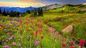 Meadow And Mountains Colorful Flowers Meadow With Grass ...