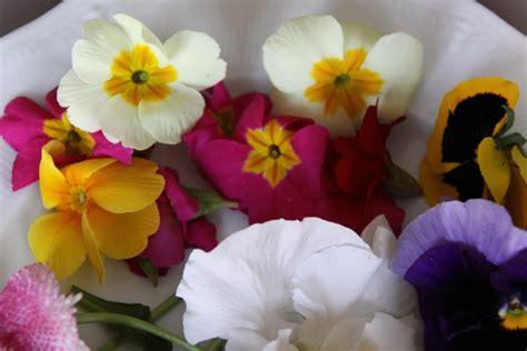 cuisiner un sandre et si on mangeait des fleurs galerie photos d 39 article