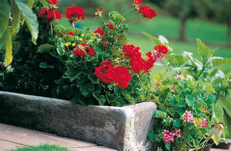 fiori di legno fai da te fioriere in cemento un vaso fai da te per il giardino