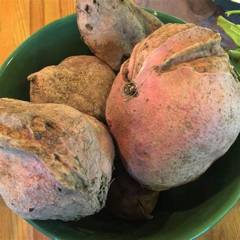 Sweet Potato Wine Experiment. Several weeks ago, I harvest ...
