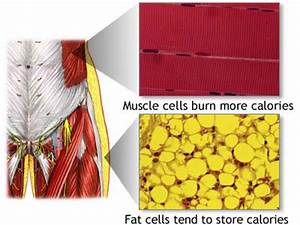 What Actually Happens To Fat Cells When Working Out