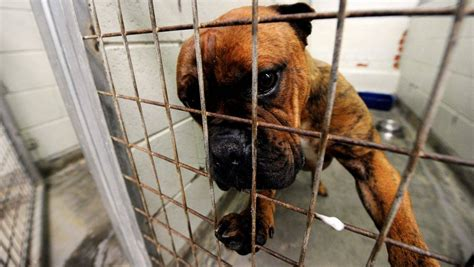 ballarat council pounded  animal shelter contract