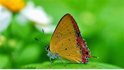 Butterfly Nature Wallpapers Macro 1080p Desktop Resolution