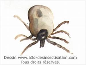 Larve Mite Alimentaire : a3d mite mite alimentaire mouche tiques ~ Nature-et-papiers.com Idées de Décoration