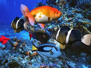 Tropical Fish Names and Images