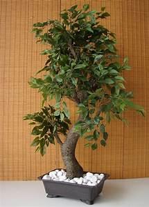 kunstlicher bonsai ficus benjamini birkenfeige 85cm With französischer balkon mit ficus benjamini im garten