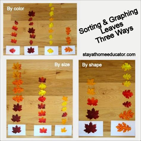 preschool co op week 4 autumn fall theme 322 | Leaf Sort Three Ways
