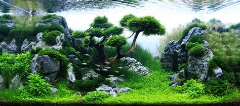 What Is Aquascaping?  Aquascaping Aquarium