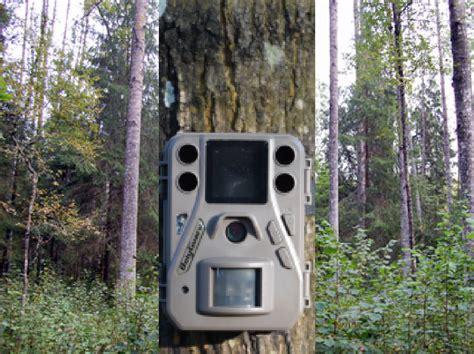 Krustpils novada Kūkās medniekiem nozog mežā izvietotu ...