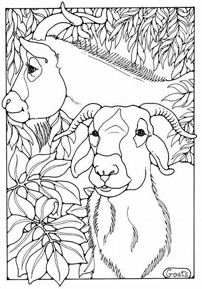 Colouring Animals Coloring Pages Goats Dandi Animal