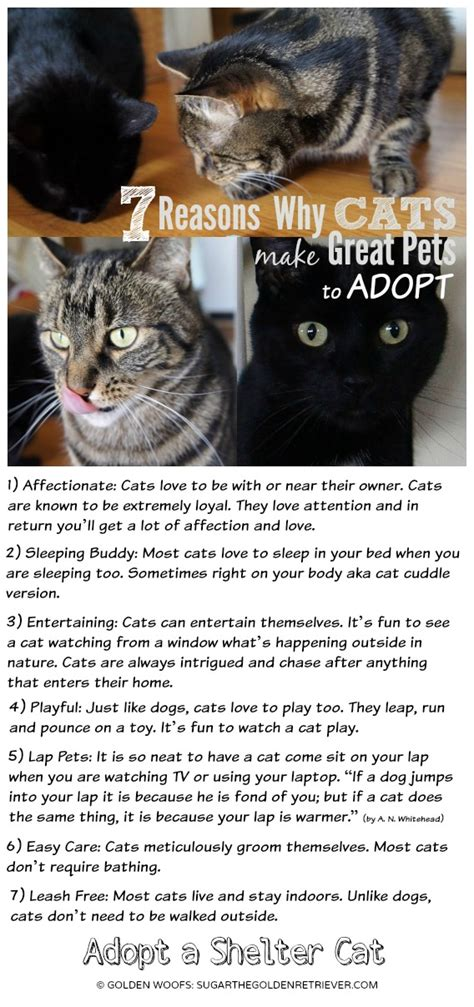 pets cats adopt why reasons shelter