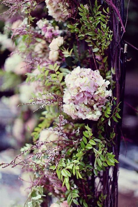 Climbing Hydrangea By Martyhackwell  Garden Pinterest