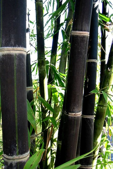 Usda Growing Zones Chilangomadrid Com