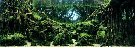 Japanese Aquascape by Awesome Aquariums Winners Of The 2015 International