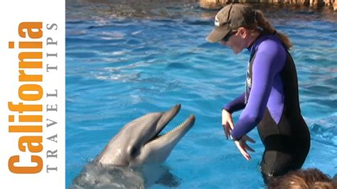 How To Become A Dolphin Trainer