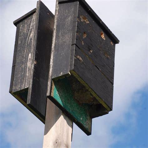 bat house bat house pinterest