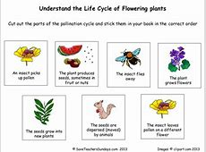 Life cycle of flowering plants worksheetpptx