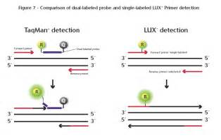 primer design for qpcr gene quantification real time pcr dyes and chemistries