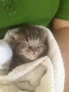 Cute Kittens Eating