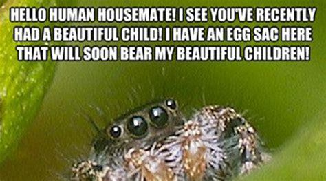Spider Bro Meme - misunderstood spider meme