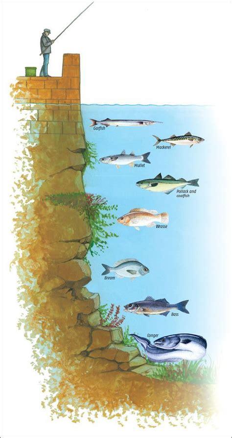 depth  life   fish fishing