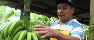 Wandfarbe ökotest Sehr Gut : kotest zu bananen banafair bananen werden mit sehr gut bewertet banafair e v ~ A.2002-acura-tl-radio.info Haus und Dekorationen