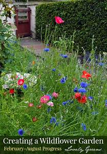 How To Grow A Wildflower Cottage Garden