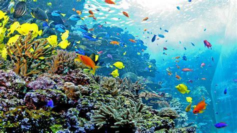 hotels near aquarium the westin peachtree plaza atlanta
