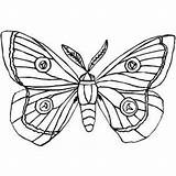 Moth Coloring Insects Butterfly Cocoon Silk Drawing Pages Colouring Moths Luna Printable Drawings Designlooter Geographic National 92kb 300px Getdrawings Freeprintablecoloringpages sketch template