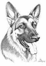 German Shepherd Coloring Pages Shepherds Drawing Dog Puppy Puppies Moon King Drawings 1094 1572 Template Kaleidoscope Amp Face Sketch Rottweiler sketch template