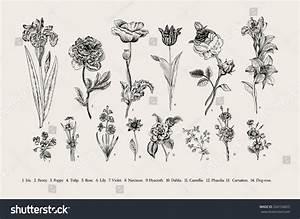 Botany Set Vintage Flowers Black White Stock Vector ...