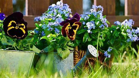 flowers for beginner gardeners flower gardening for beginners a guide to growing your dream garden