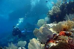 Scuba Diving in Bocas del Toro: fotografía de Hotel Bocas del Toro, Pueblo de Bocas TripAdvisor