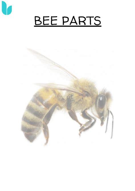 bee parts worksheet