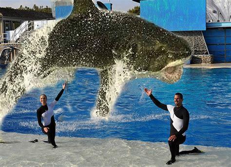 Seaworld Announces Shift From Orcas Sharks San Diego