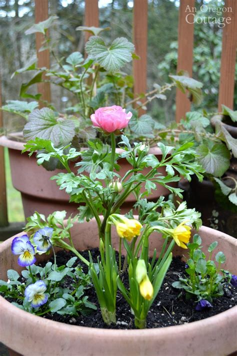 ideas tips  refresh  flower pots  spring