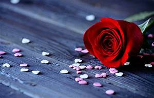 Roses flowers love romance red hearts emotions for girls ...