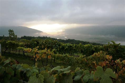 Fjord Vineyards by Fruit Of The Vine Marbers Musings