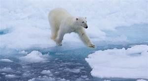 Polar bear attacks, causes, and prevention - Polar Bears ...