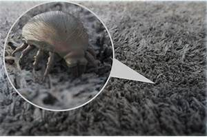 Dust Mite Allergy, Causes, Symptoms and Treatment – ENT ...