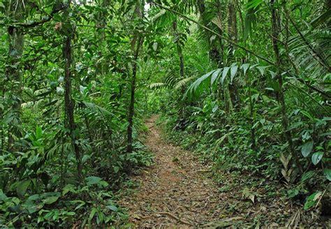 tropical rainforest  chocolate adventure san jose