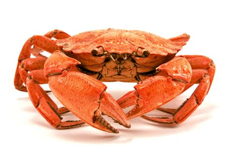 red boiled crab  atlas edge staffing services