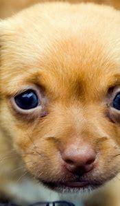 Cute Puppy Desktop