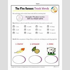 Five Senses Activity For Kindergarten And 1st Grade Touch