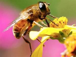 Fabriquer Un Piege A Guepes : frelon asiatique gu pe fabriquer un pi ge pour aider les abeilles truc bee y insects ~ Melissatoandfro.com Idées de Décoration