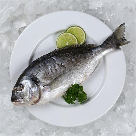 fresh fish   plate   stock image image
