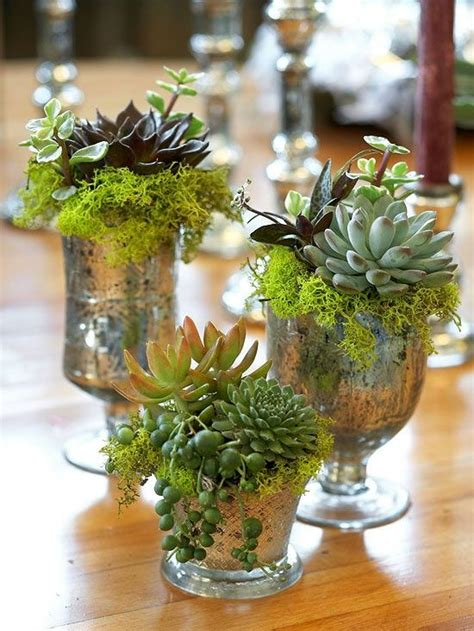 decorating with succulents how to display succulents 30 cute exles digsdigs