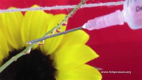 macro photography drops  flowers tutorial youtube